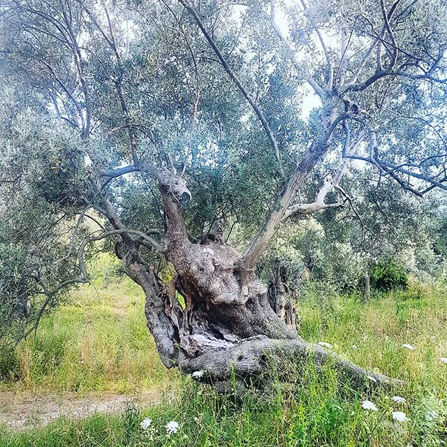 #Madreterra #Calopezzati #Calabria #southitaly
